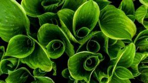 green-bundles